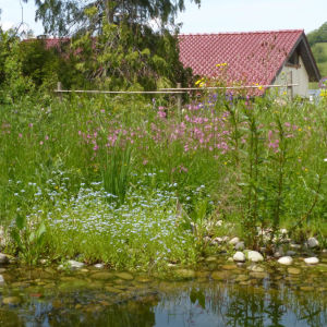 Naturgarten in Wittnau